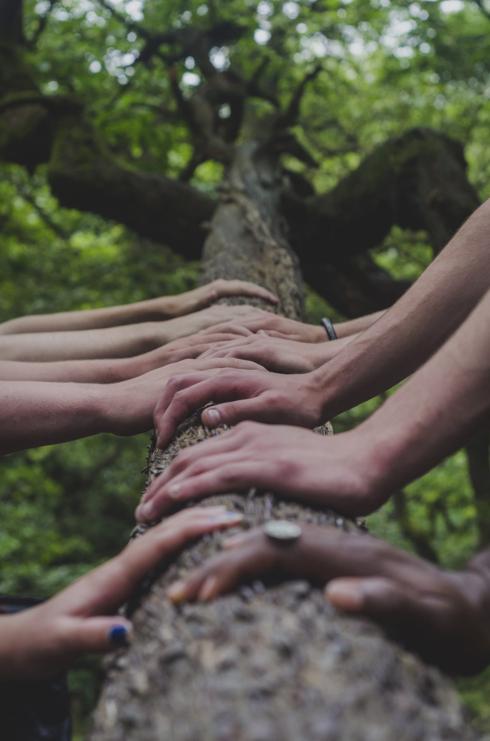festival FOCUS   Mains sur une tronc d'arbre pour illustrer toutes les infos utiles pour les bénévoles